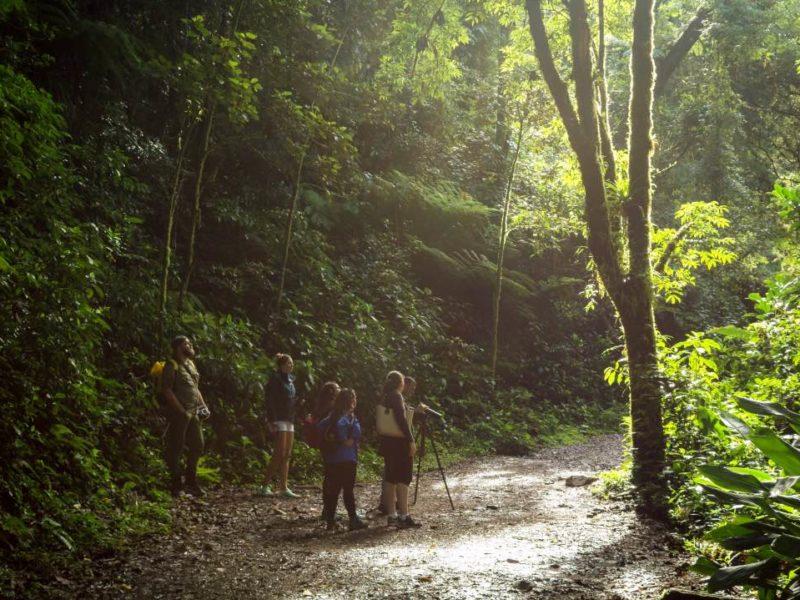 Vogels Spotten In Costa Rica