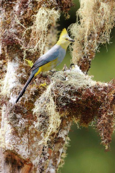 Tropische Vogel In San Gerardo De Dota In Costa Rica