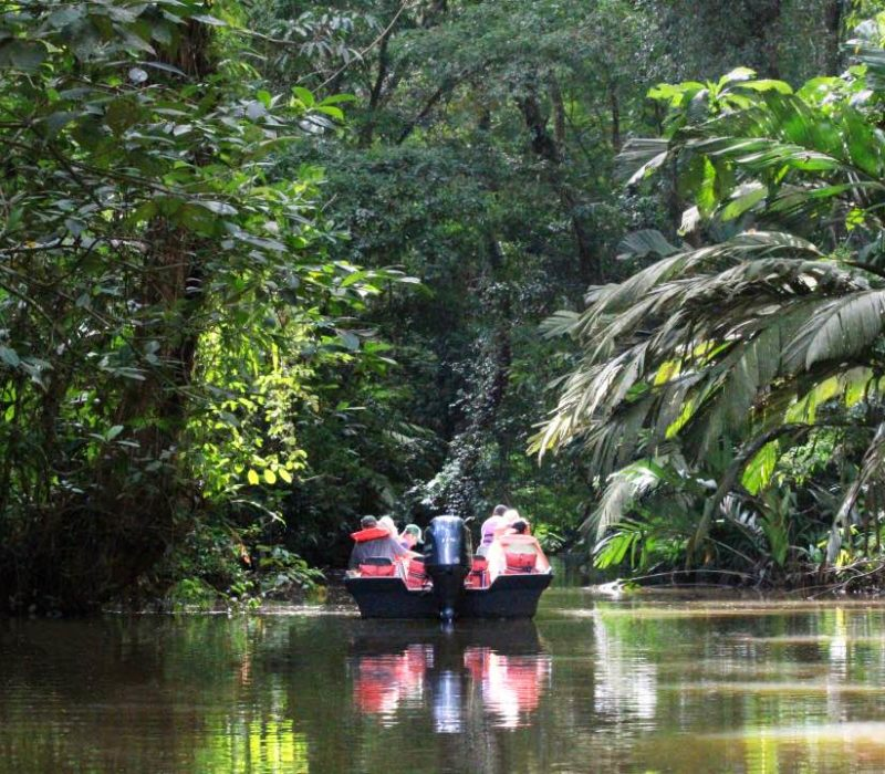 Varen Door De Kanalen Van Tortuguero In Costa Rica