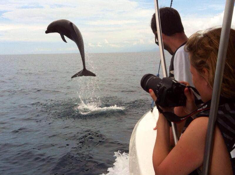 Costa Rica Uvita Springende Dolfijnen