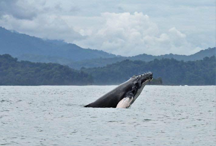 Walvissen Spotten In Uvita Costa Rica