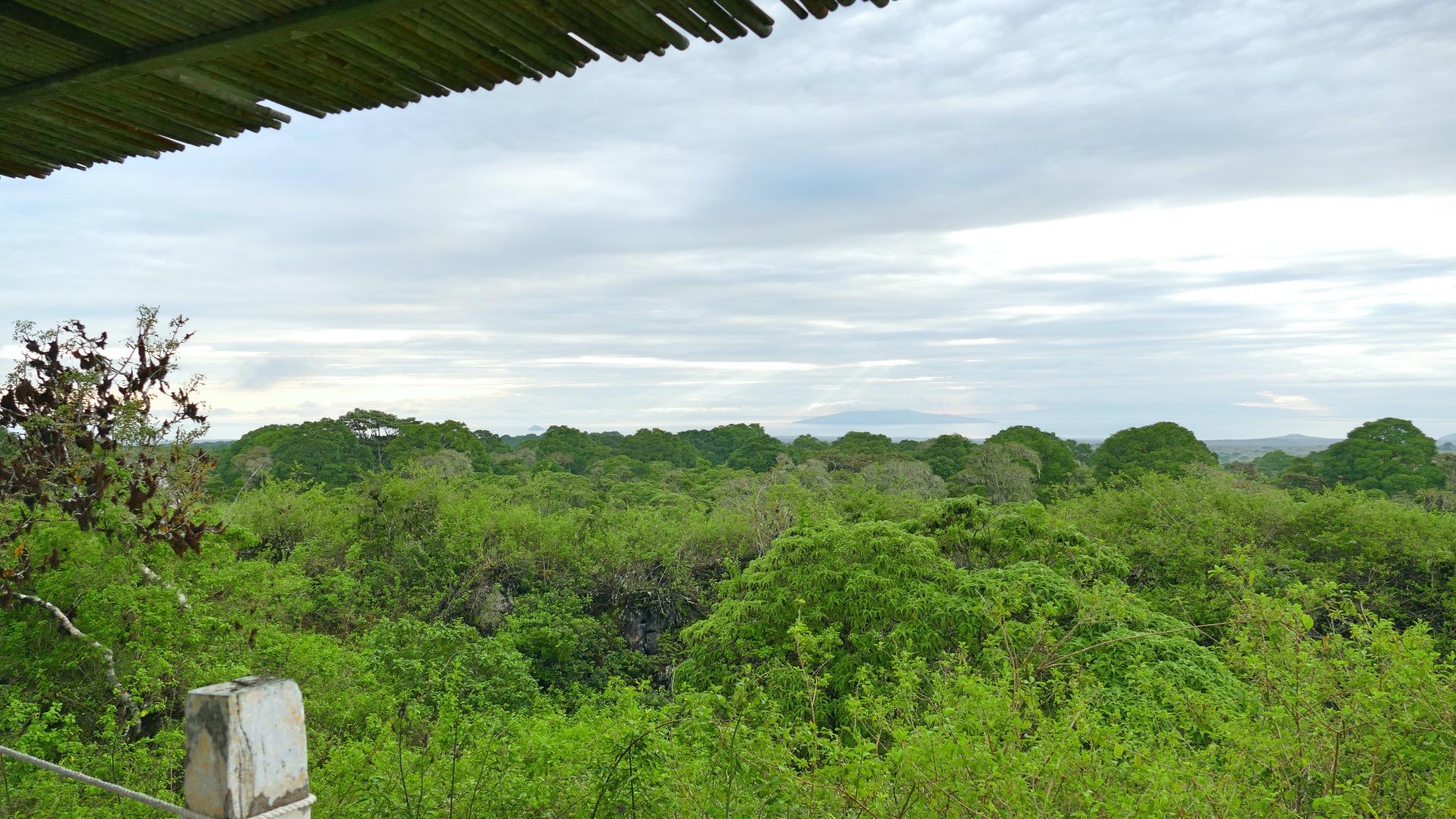 Galapagos Hooglanden Santa Cruz